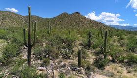 13041 E Plaza Cantil #76, Tucson, AZ 85749