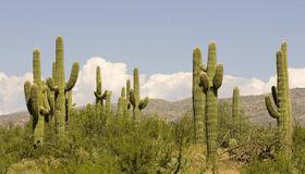 7970 S Circle C Ranch Road #l-390, Vail, AZ 85641