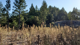 6100 West hwy 20#20, Willits, CA 95490