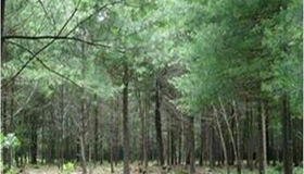 Lot 1 South St., Middleboro, MA 02346