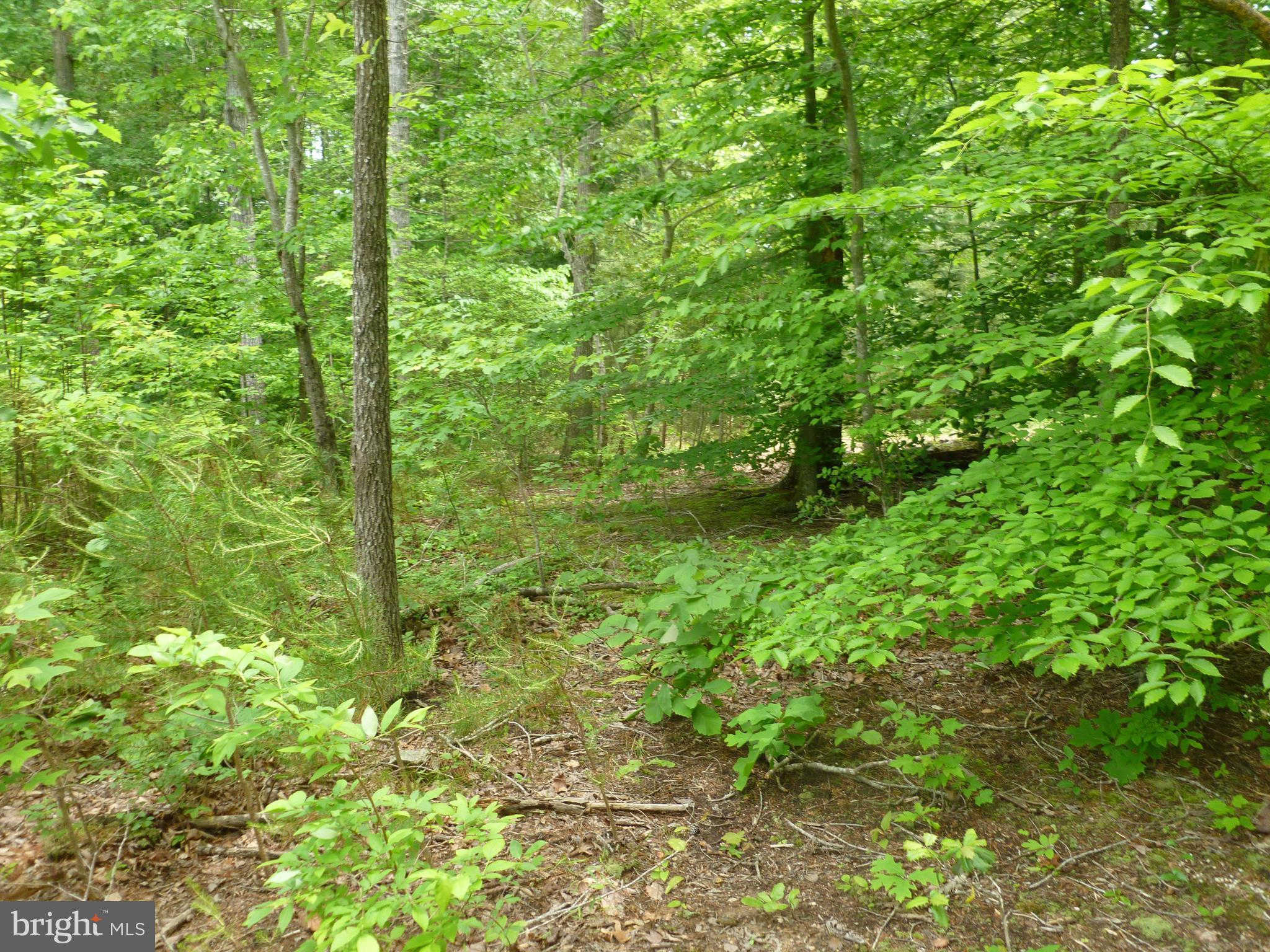 Rogers Ford Road #lot #2, Sumerduck, VA 22742 now has a new price of $90,000!