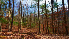 00 Windago Road #2, Weaverville, NC 28787